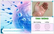 Thông tin và hình ảnh tinh trùng yếu nam giới cần biết